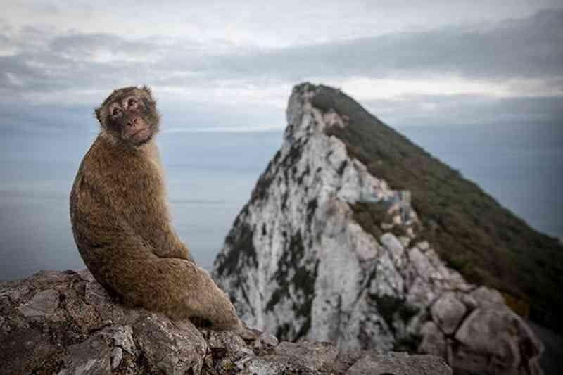 Mundo perdeu 60% dos animais selvagens em 40 anos, alerta estudo