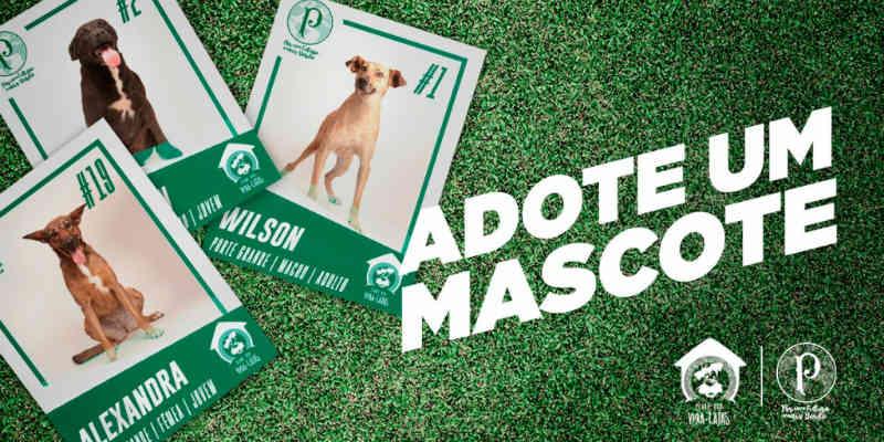 No Dia dos Animais, Palmeiras usa redes sociais para incentivar adoção