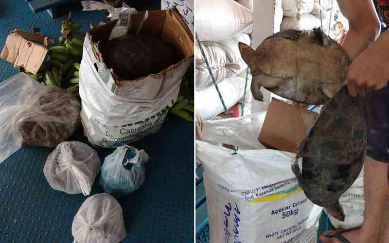 Quelônios e ovos estavam escondidos em caixas no meio de um carregamento de bananas — Foto: Polícia Militar/Divulgação