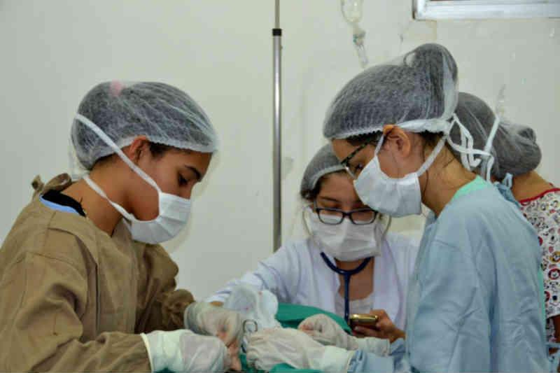 Centro de Zoonoses realiza esterilização gratuita em João Pessoa, PB