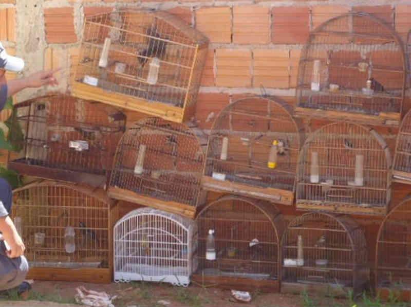 Idoso considerado maior traficante de animais do país é condenado a 20 anos de prisão