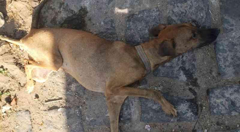 Após morte de cadela, protetora de animais denuncia que suspeito estupra animais e come gatos