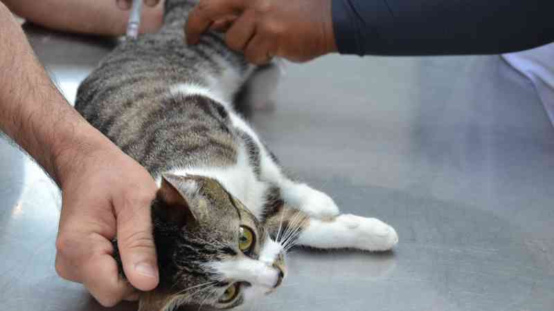 Agendamento para castração gratuita de cães e gatos acontece nesta quarta-feira, em João Pessoa, PB