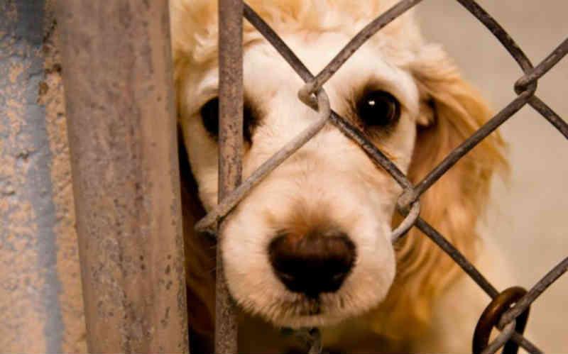 PL obriga pet shops a denunciarem maus-tratos na Paraíba