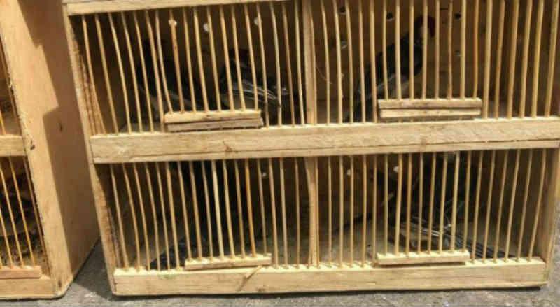 Dupla é detida com 51 aves silvestres na Feira de Cavaleiro em Jaboatão dos Guararapes, PE