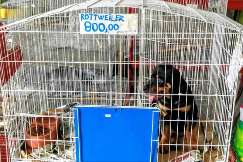 Petshop é multado por maus-tratos e venda irregular de animais em Jaboatão dos Guararapes, PE