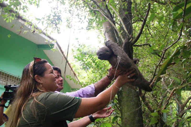 Animais são devolvidos à natureza no aniversário de 16 anos da reserva da Mata do Passarinho, em Olinda, PE