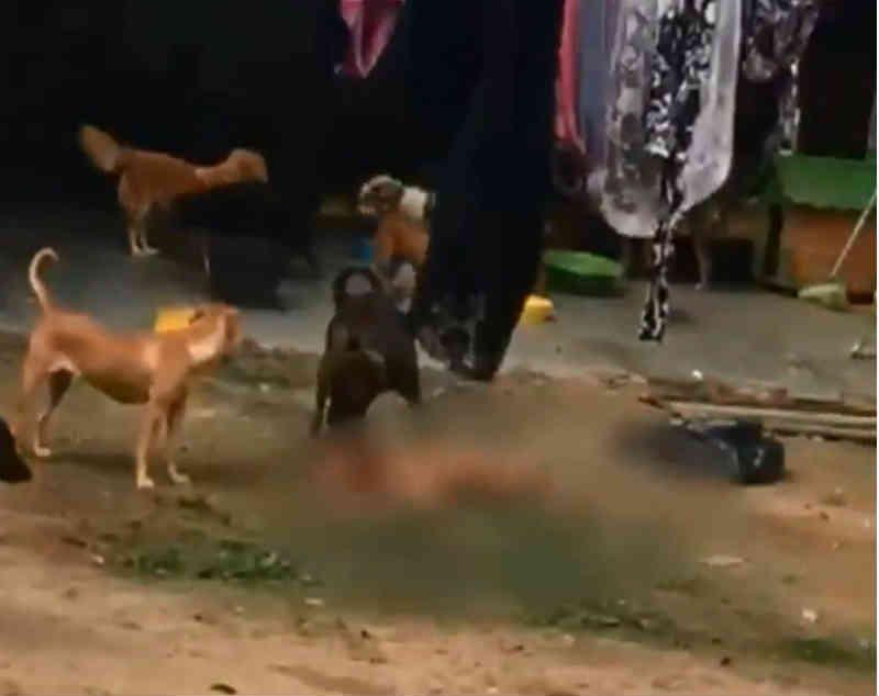 Vizinho denuncia abandono de cerca de 100 cachorros em Camaragibe, PE; animais estão comendo uns aos outros