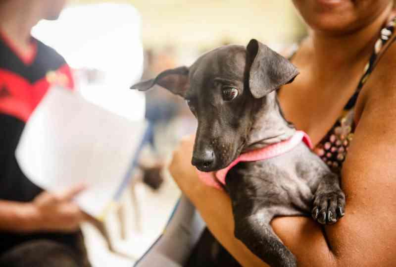 UFRPE lança campanha Outubro Pet Rosa para prevenir câncer em animais