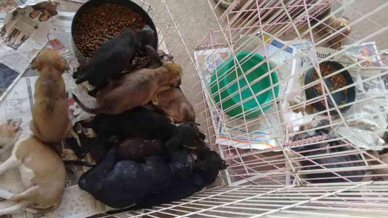 Campanha em Teresina (PI) arrecada ração para animais durante o mês de outubro