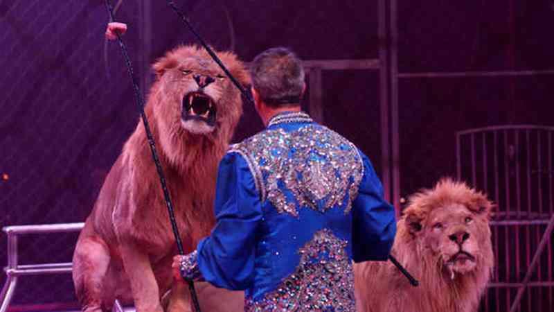 Leões, elefantes, focas: fim da exploração de animais selvagens no circo aprovado em Portugal