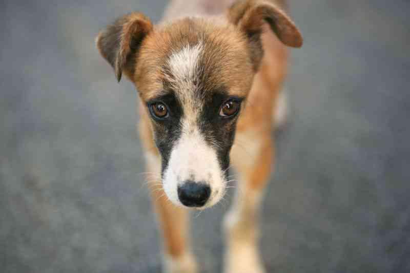 Número de animais abandonados voltou a aumentar no último verão em Portugal