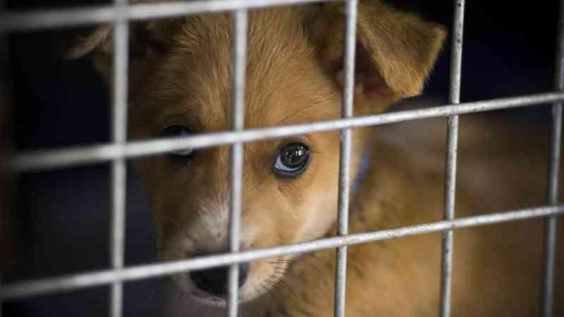 Portugal: União Zoófila está a ficar sem comida e 'apela a todos' para ajudarem os animais