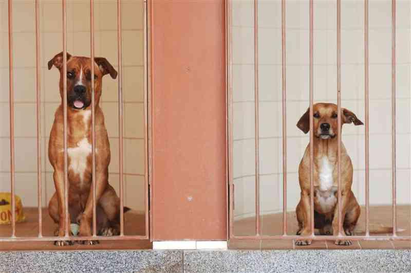 PSP retira sete cães que eram vítimas de maus-tratos a mulher residente em Matosinhos, Portugal