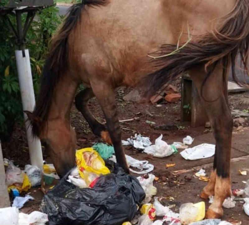 Foto de cavalo comendo lixo revolta defensores dos animais em Apucarana, PR