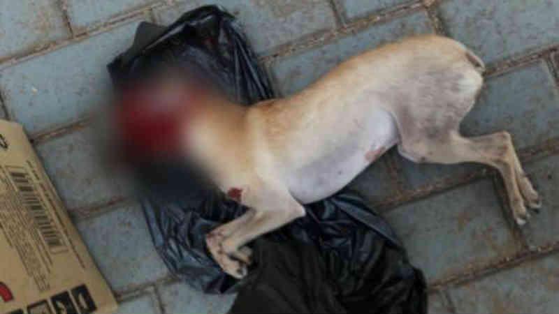 Acusado de matar pinscher na frente de crianças terá que indenizar família em Cascavel, PR