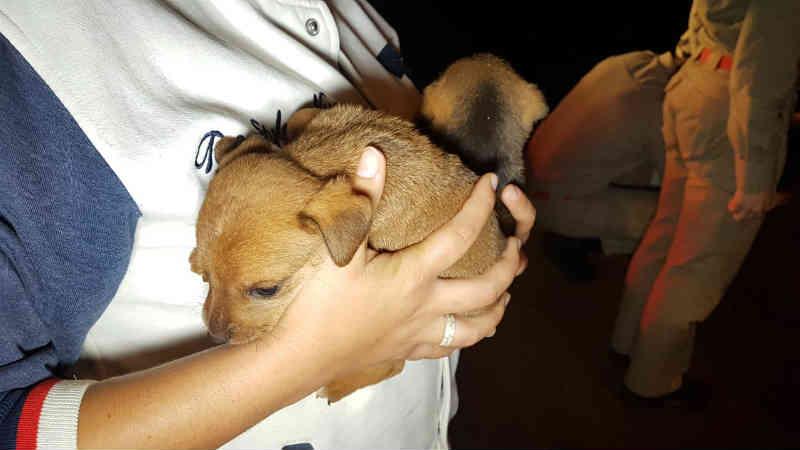 Cachorro cai em bueiro e Bombeiros são acionados em Cascavel, PR