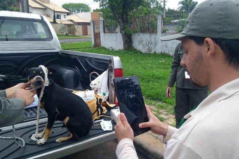Centro de Controle de Zoonoses inicia censo populacional de cães de rua em Foz do Iguaçu, PR