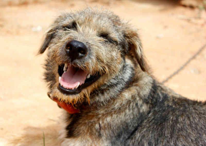 Servidores do CCZ farão levantamento populacional de cães de rua em Foz do Iguaçu, PR