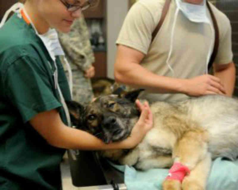Prefeitura de Londrina (PR) lança política inédita de proteção aos animais e pretende contratar veterinários