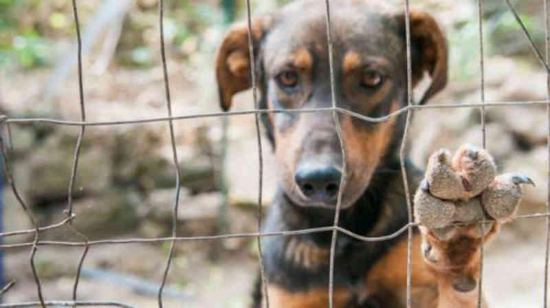 Sema registra 1,5 mil denúncias de maus-tratos aos animais em Londrina, PR