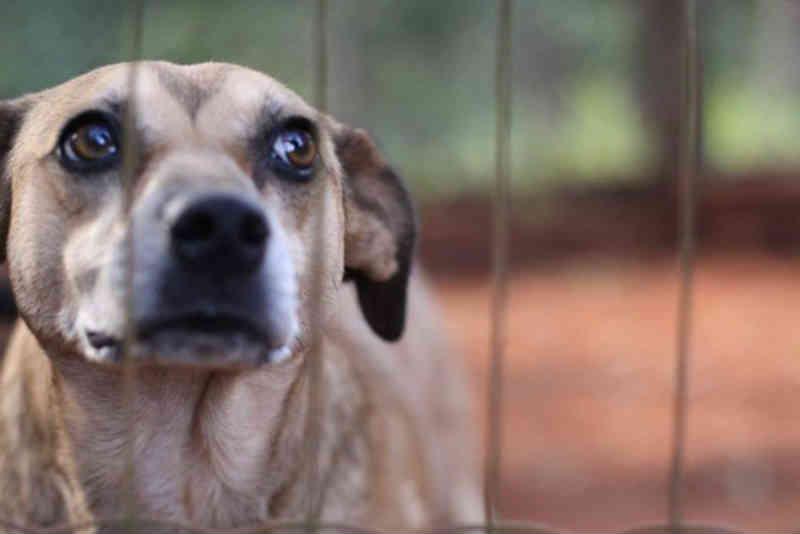Lei que penaliza maus-tratos contra animais é sancionada em Umuarama, PR