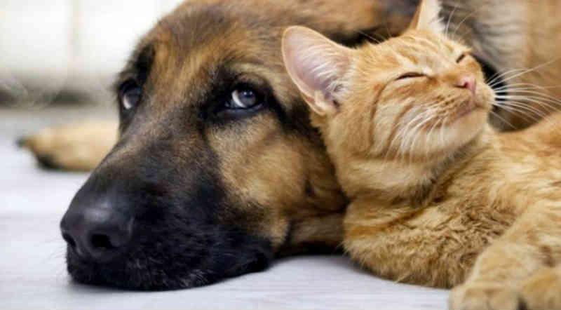 Lei que aplica penalidades a maus-tratos contra animais é aprovada em Umuarama, PR