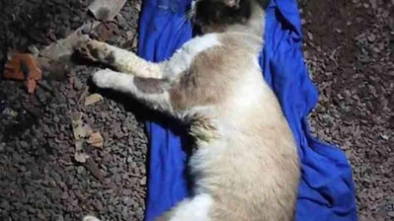 Internauta relata que animais estão sendo envenenados no Santa Felicidade, em Cascavel, PR