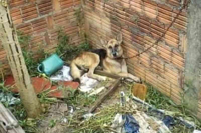 Multa para maus-tratos a animais pode subir para R$ 2 mil em Curitiba