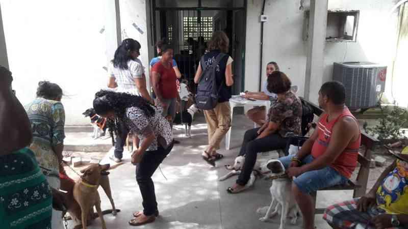 Recife faz parceria internacional e castra 300 animais