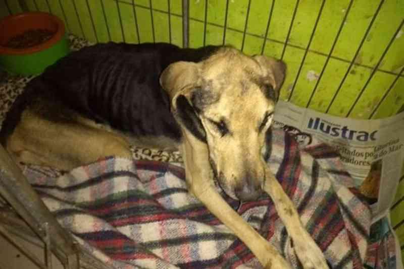 ONG pede doações para compra de medicamentos para cães em Umuarama, PR