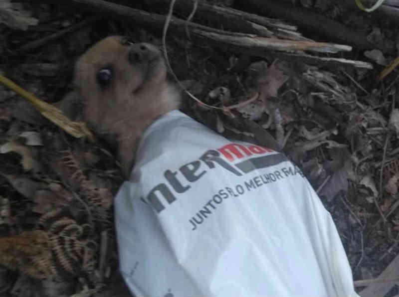 Cadela abandonada dentro de um saco de plástico em Amares, Portugal