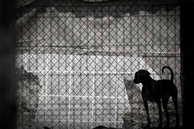 Portugal: Câmara de Braga garante estar 'na vanguarda' das política de proteção animal