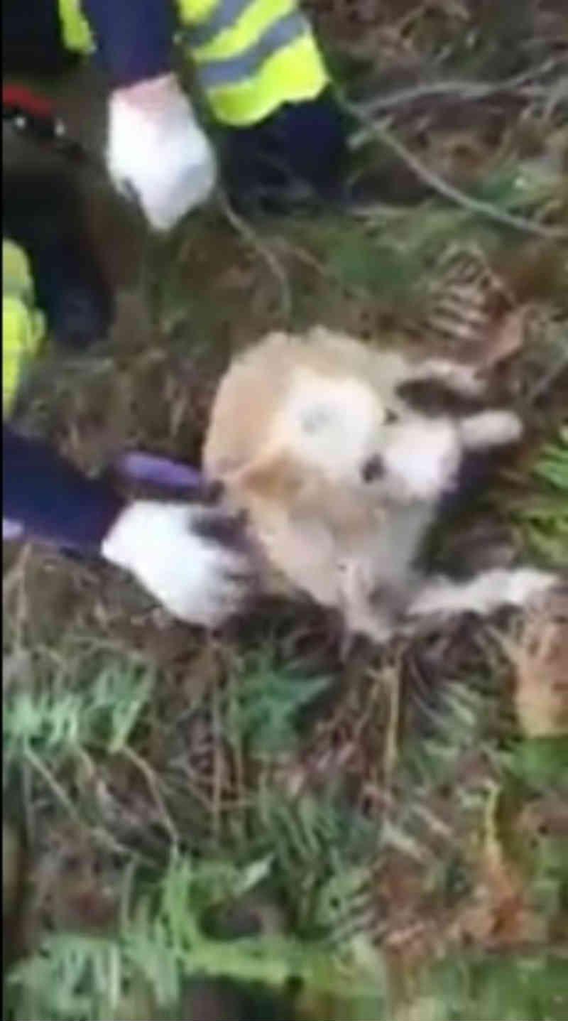 Três cães resgatados de poço com sete metros em Guimarães, Portugal
