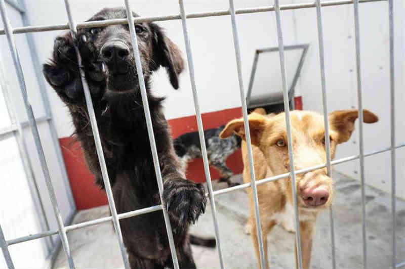 Portugal: Parlamento rejeita rede urgente para recolher e esterilizar animais