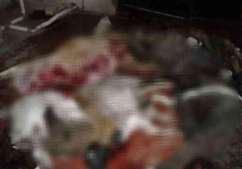 Mais de 12 animais são encontrados mortos em propriedade rural na fronteira Paraguai-Brasil