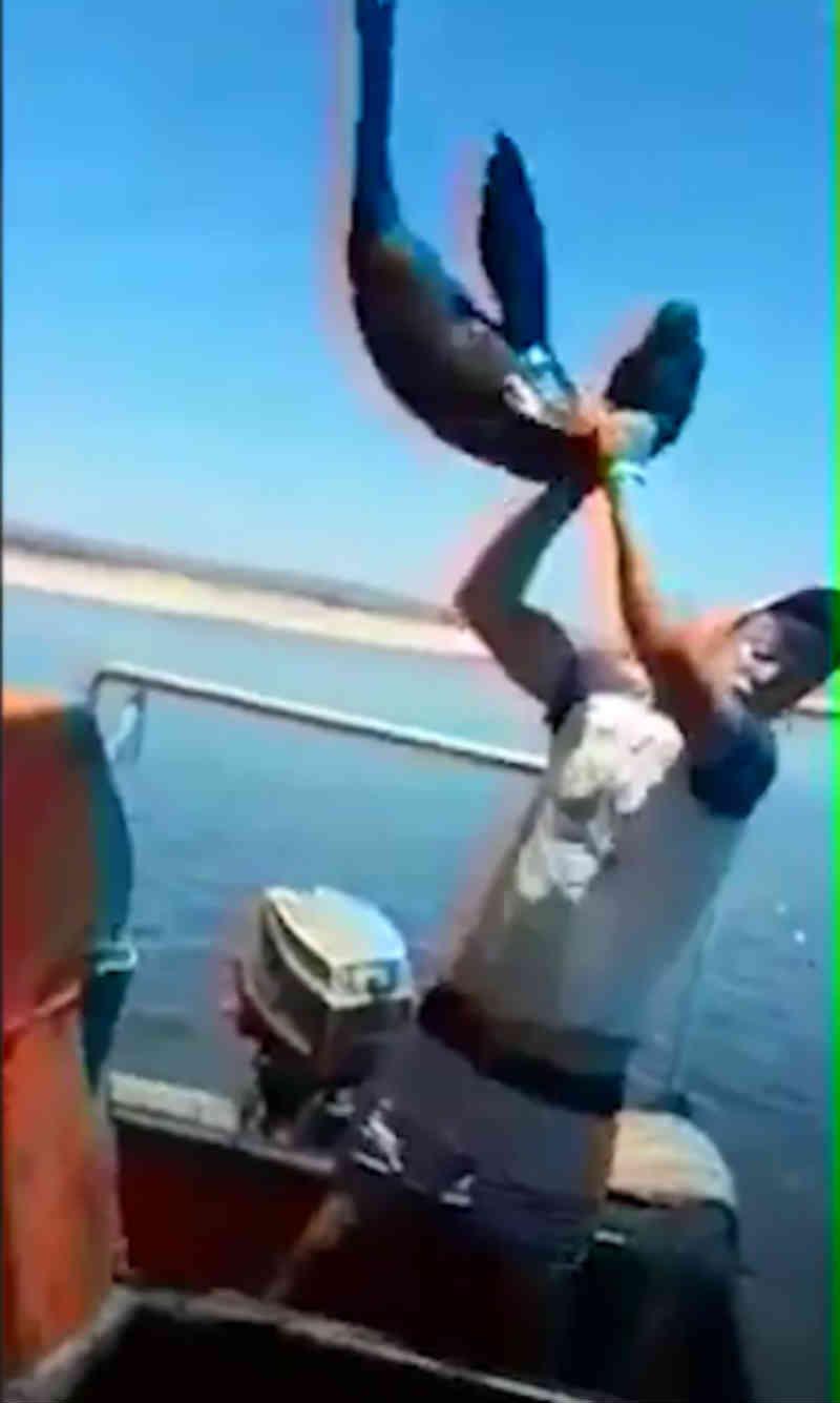 Pescadores que atacaram filhote de foca comparecem ao tribunal na África do Sul; VÍDEO