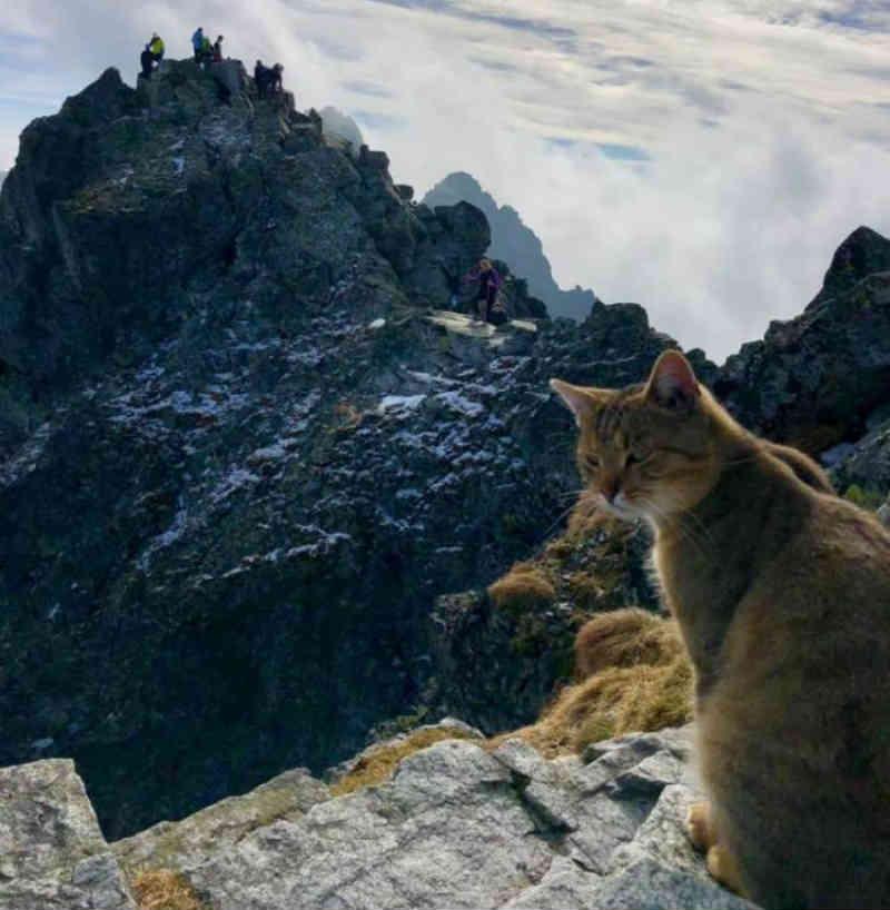Alpinista encontra gato faceirão no topo da montanha mais alta da Polônia
