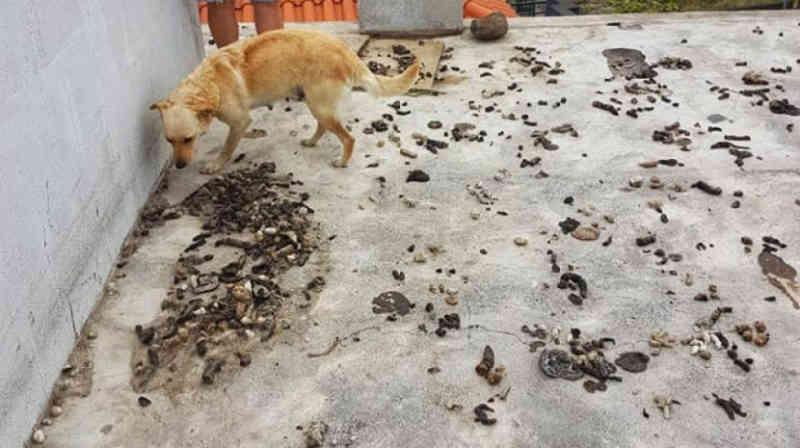 VÍDEO: cães são encontrados em condições lamentáveis em Lobos, Portugal
