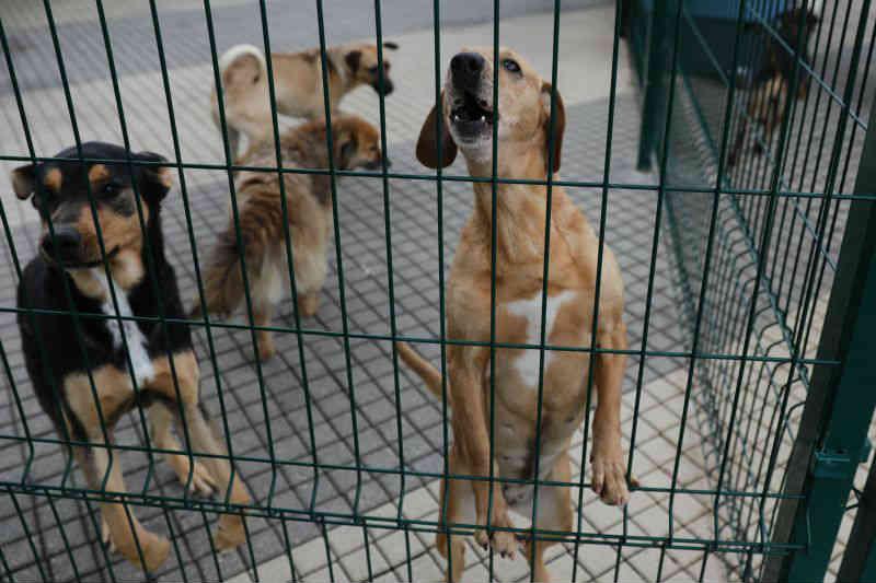 Portugal: Matosinhos faz protocolos com centros veterinários para estimular a adoção animal