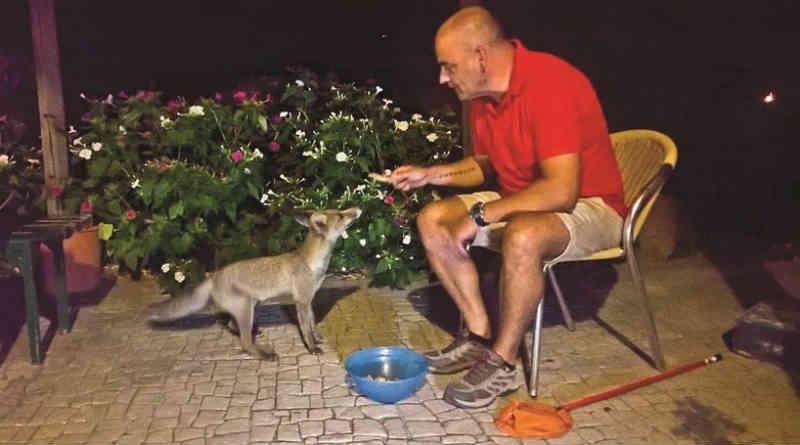 Raposas, veados e até um lince passam fome na serra de Monchique, em Portugal