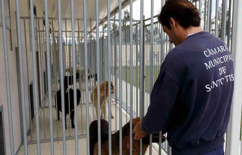 Portugal: Câmara Municipal de Santo Tirso assinala dia Mundial do Animal com oferta do chip