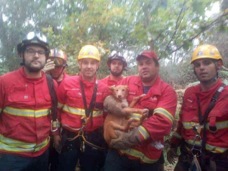 Bombeiros resgatam cão de uma mina em Portugal