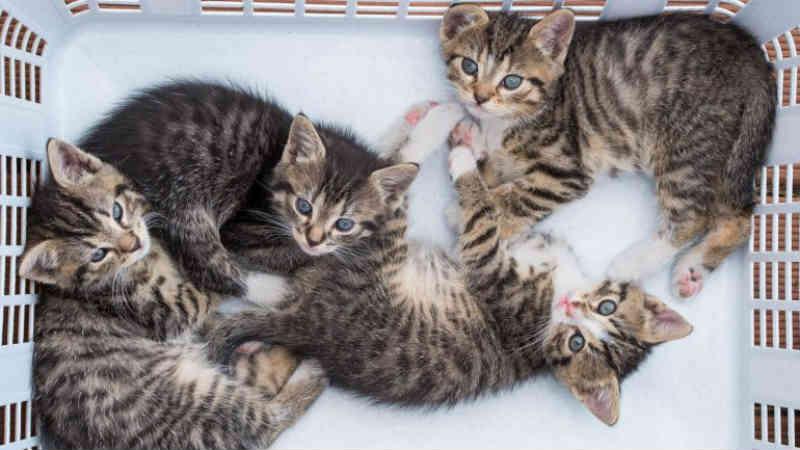 Portugal: Associação em Almada faz esterilizações a gatos de rua há cinco anos