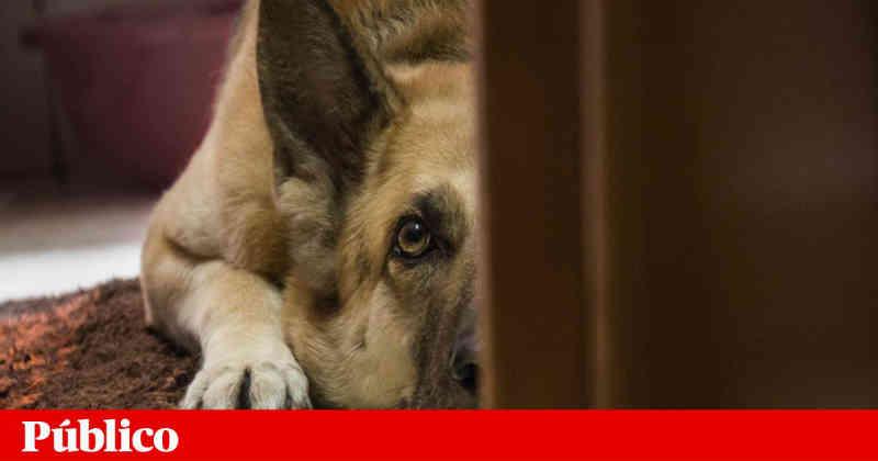 Projecto do PAN para punir maus-tratos psicológicos a animais vai a debate em Portugal