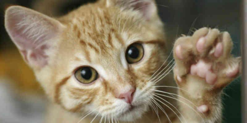 Gatil será construído para abrigar gatos acolhidos pela Superintendência de Proteção Animal de Cabo Frio, RJ