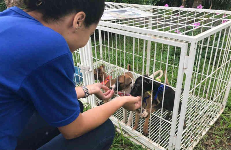 Projeto que oferece castração, vacinação e adoção de animais será realizado nesta terça em Campos, no RJ