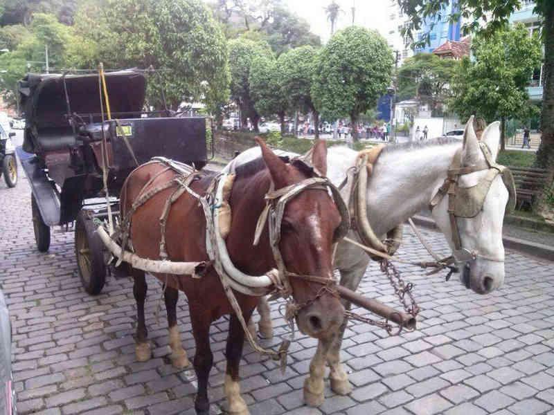 Plebiscito decide pelo fim da tração animal nas charretes em Petrópolis, no RJ