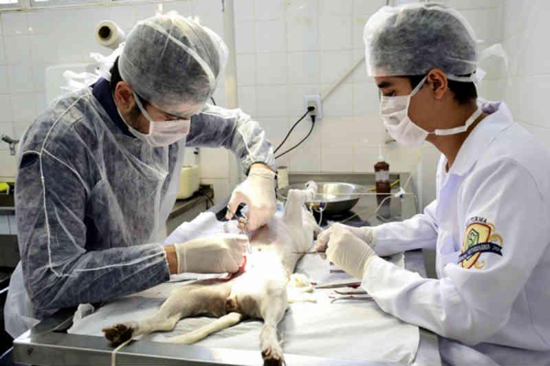 Centro de Zoonoses de Resende (RJ) bate recorde de castrações em setembro