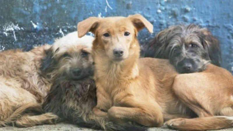 Rio: Falta de dinheiro faz Fazenda Modelo suspender atendimento a cães e gatos